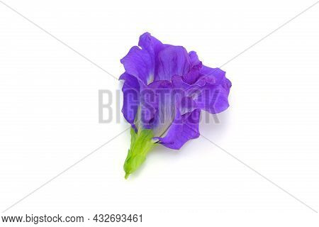 Clitoria Ternatea L Or Pea Flower,  Butterfly Pea Flowers Isolate On White Are Blue To Purple. It Is