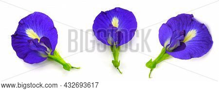 Clitoria Ternatea L Or Pea Flower,  Butterfly Pea Flowers Are Dark Silver To Purple. It Is An Herb T