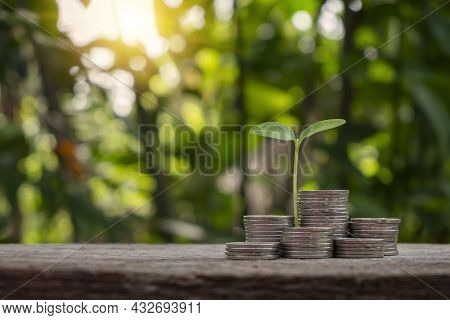 The Sapling Growing On A Pile Of Coins Has A Natural, Blurry Green Background. Money Saving Ideas An