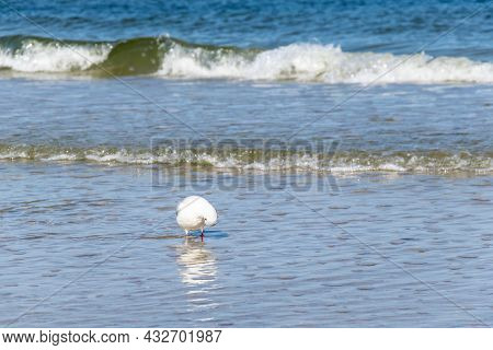 White Seagull On The Background Of Sea Waves