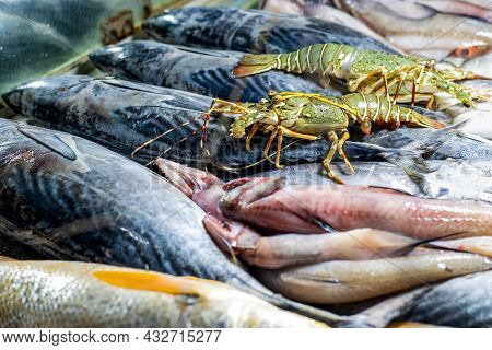 Collection Of Various Sea Fish In The Seafood Market Close Up