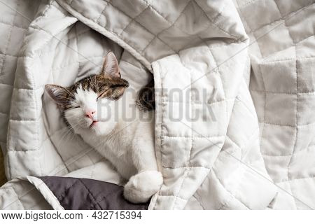 Cute White With Gray Cat Lies In Bed At Home, House Comfort Concept, Indoor. Cope Space. Adopt Cat