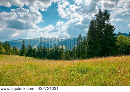 Mountain Landscape With Meadow And Forest. Beautiful Countryside Scenery In Summertime. Coniferous T