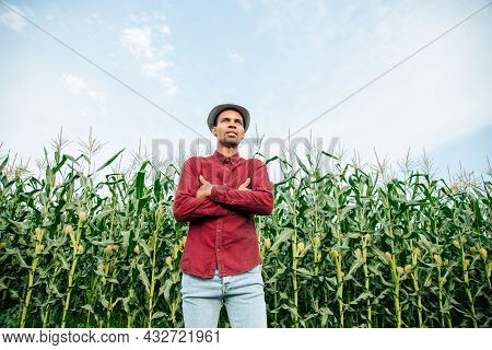 Portrait Of A Proud Young African American Farmer Standing With Folded Arms With Maize Crop In Backg