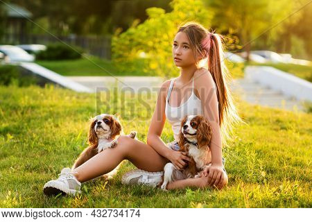 Caring Teen Breeder Walks At Sunset With Two Purebred Pets. Cavalier King Charles Spaniel Puppies Fo