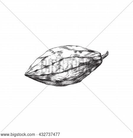 Chocolate Cacao Bean, Fruit Of Cocoa Plant For Cooking Sweet Food Or Drinks.