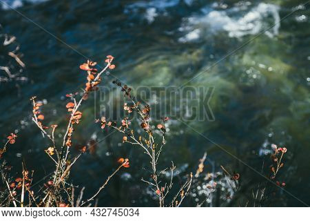Scenic Autumn Nature Background With Red Leaves Over Bokeh Of Green Water Stream In Sunshine. Sunlit