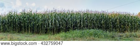 Edge Of The Field With Corn Planting Against The Sky In Summer Morning, Wide Panoramic View