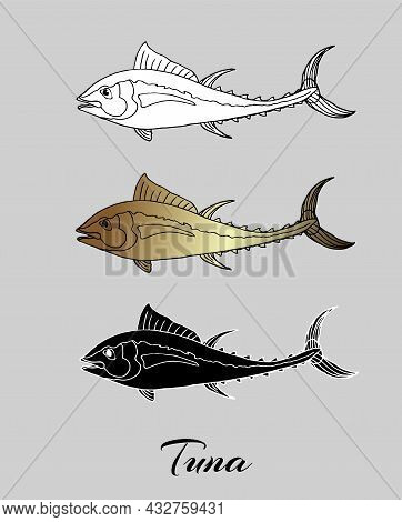 Tuna Fish Freehand Drawing. Monochrome Vector Illustration On Isolated Background.