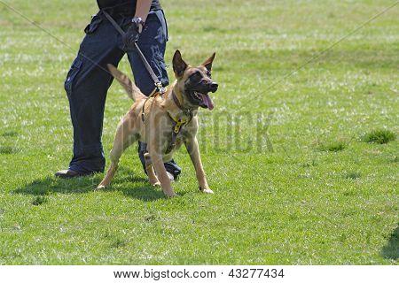 Dog training school.
