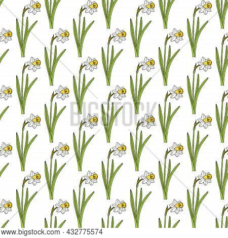 Seamless Pattern With Poets Daffodil, Or Narcissus On White Background. Vector Illustration.