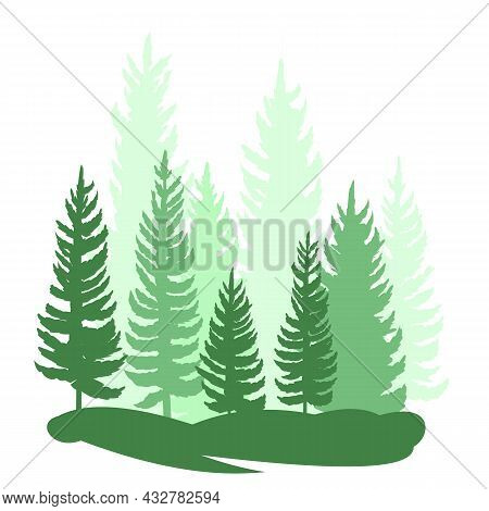 Forest Silhouette Scene. Landscape With Coniferous Trees. Beautiful Green View. Pine And Spruce Tree