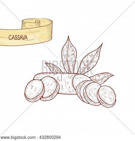 Cassava. Tuber, Leaves. Sketch. On A White Background.