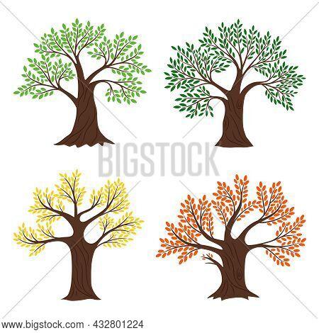 Four Seasons Trees. Vector Seasonal Tree Vector Set Illustrations, Beautiful Natural Spring Fall Sum