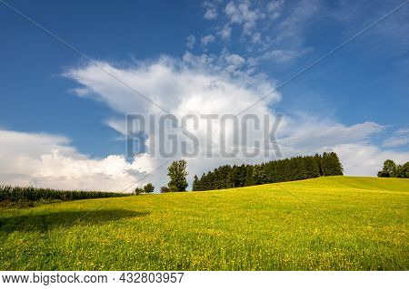 Summer Landscape With Flowering Meadow, Trees And Blue Sky With White Clouds. Czech Republic, Europe