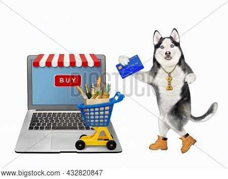 A Dog Husky With A Credit Card Orders Food Online Using A Computer. White Background. Isolated.