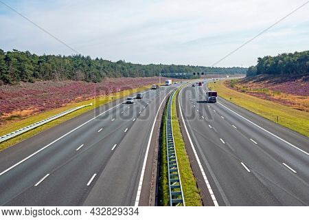 Highway A1 through the forest with blossoming heather at the Hoge Veluwe in the Netherlands