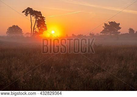 Sunrise with fog in the National Park De Hoge Veluwe in the Netherlands