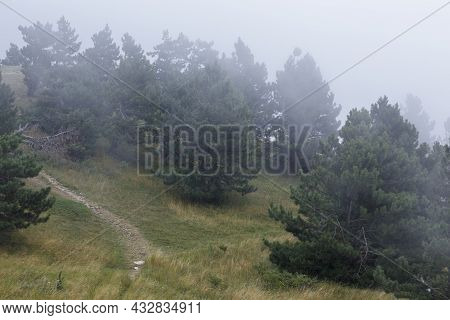 Hills With Conifers And Withered Grass Wrapped In Fog. Hills Near The Top Of Mount Ai-petri.