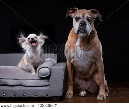 studio shot of cute dogs on an isolated background