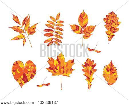 Set Of Hand Drawn Orange, Red And Yellow Autumn Leaves - Maple, Maple Seeds, Ash-leaved Maple, Rowan