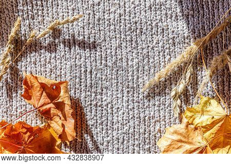 Autumnal Background. Dried Orange Fall Leaves And Plants Lying On White Knitted Sweater. Top View Fl