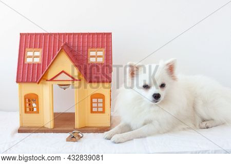 On A White Background There Is A Small House Next To A White Little Dog Pomeranian