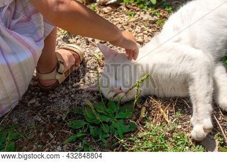 White Domestic Cat Sleeping In The Sun With Near Little Girl. No Face. Hand Touches Animal. Pet And