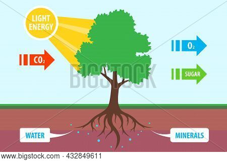 Scheme Of Photosynthesis Of A Tree. Conversion Of Carbon Dioxide To Oxygen. Flat Vector Teaching Ill
