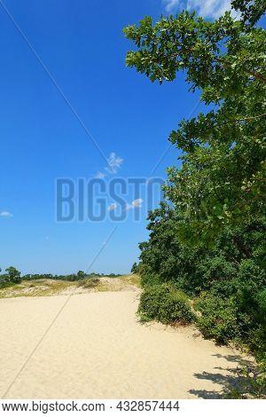 Summer landscape of Letea sand dunes, Danube Delta, Romania, Europe