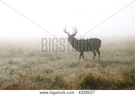 Mature buck on alert in misty field. poster