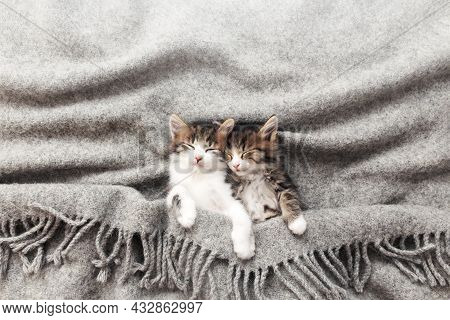 Two Little Kittens Sleep With Their Eyes Closed And Covered With Fluffy Blanket