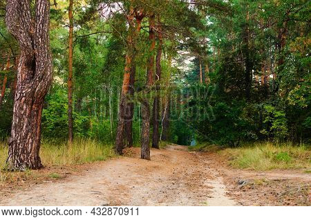 Mysterious Landscape View Of Winding Dirt Road In The Autumn Forest. Forest Path In The Morning. For