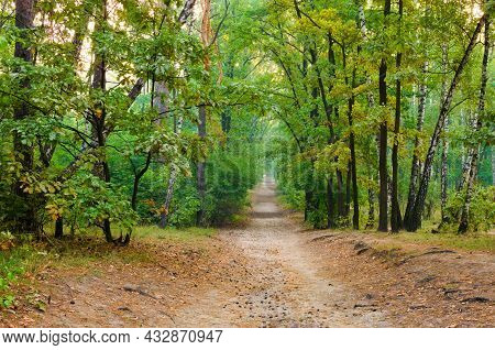 Picturesque Landscape View Of Narrow Dirt Road In The Autumn Forest. Forest Path In The Morning. For