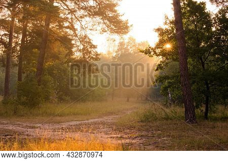 Picturesque View Of Autumn Forest During Sunrise. Rays Of The Sun Shine Through Trees. Light Fog Add