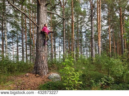 Tween girl wearing red waterproof jacket and rubber boots climbs on big pine tree while playing on a summer forest. Children woods activities and adventures concept