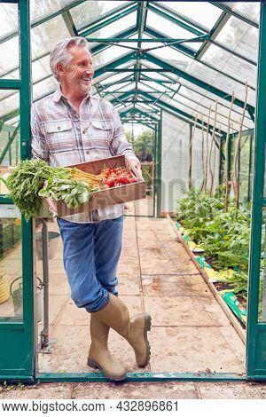 Full Length Portrait Of Senior Man Holding Box Of Home Grown Vegetables In Greenhouse