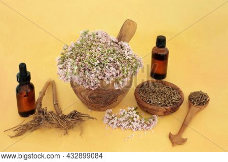 Valerian adaptogen herbal plant medicine with flowers, dried root and medicine bottles. Used to treat insomnia, anxiety, headache, digestive problems, menopause symptoms, muscle pain, fatigue.