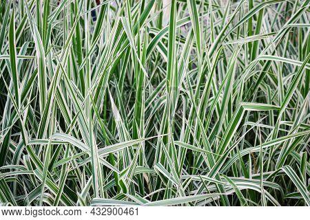 Elongated Light Fresh Green Shaggy Grass Backdrop