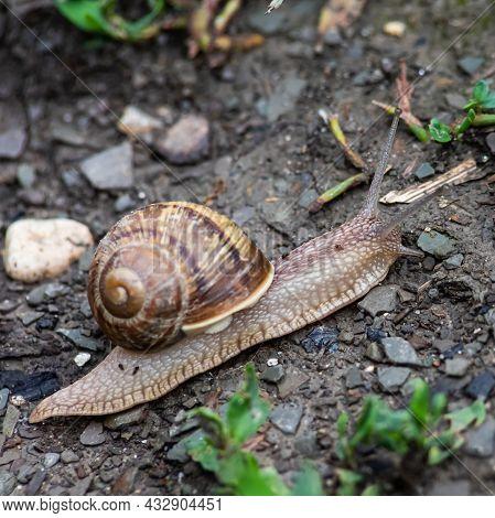 A Snail Crawls On The Ground Rainy Weatherrainy Weather