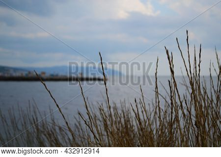 Grass On The Bank Of A Cliff Overlooking The Sea, Bush Of Grass Close-up Against The Background Of T