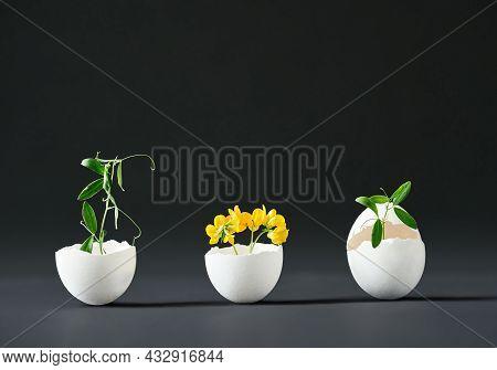 Flowers In Eggshell On Black Background. Eggshell Vase