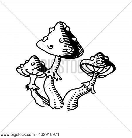 Vector Illustration. Amanita Mushroom. Poisonous Toadstool Fly Agaric. Hand Drawn Doodle. Cartoon Sk