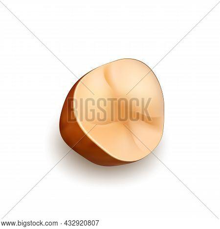 Brazil Nut Crop Cut Piece Natural Food Vector. Crashed Raw Brazil Nut Garden Tree Product. Fresh Har