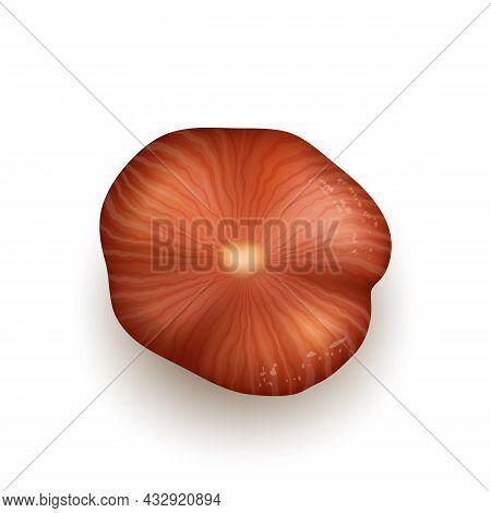 Hazelnut Natural Nut Kernel Bio Nutrition Vector. Hazelnut Vegetarian Whole Delicious Product. Fresh