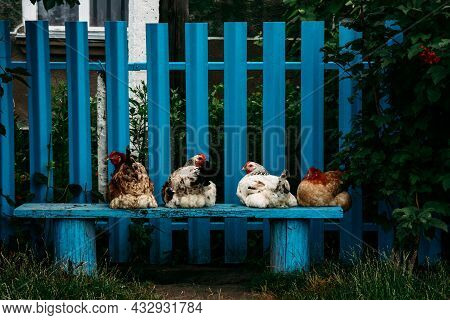 Rural Scene With Chickens On A Blue Wooden Bench Next To Fence In Ukrainian Village