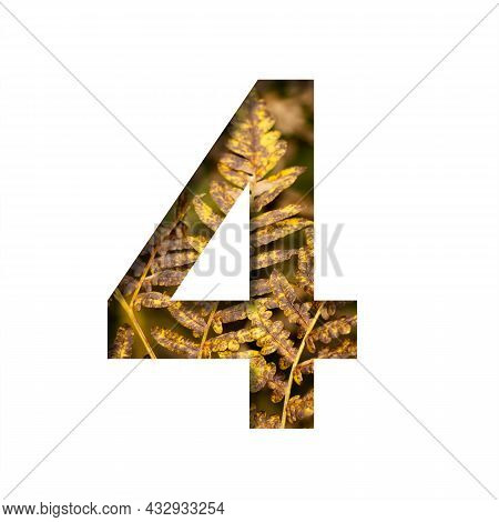 Digit Four, 4 Is Cut From White Paper With Autumn Fern Leaves Background, Late Autumn Font Or Alphab