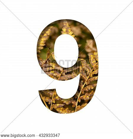 Digit Nine, 9 Is Cut From White Paper With Autumn Fern Leaves Background, Late Autumn Font Or Alphab