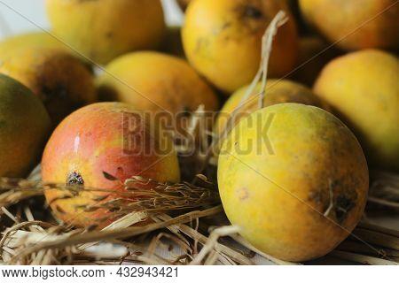 Alphonso Mangoes Kept On Hay.