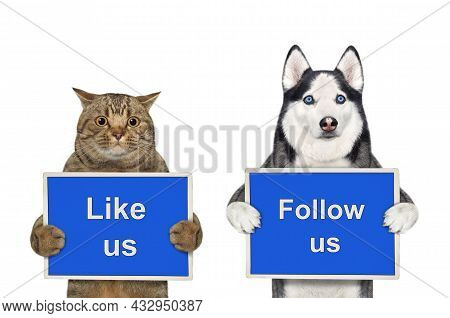 A Dog Husky And Beige Cat Are Holding Blue Signs T Says Like Us And Follow Us. White Background. Iso